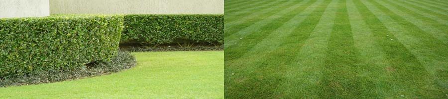 Lawn mowing and hedging